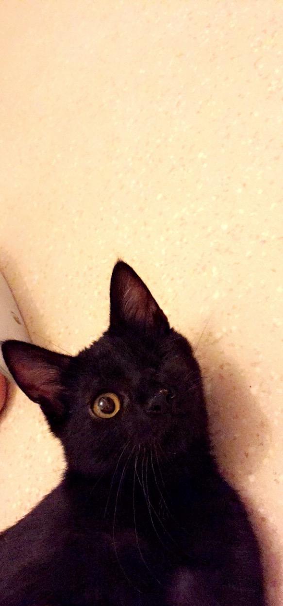 milord - Milord, chaton noir né le 01/05/2016 Image20