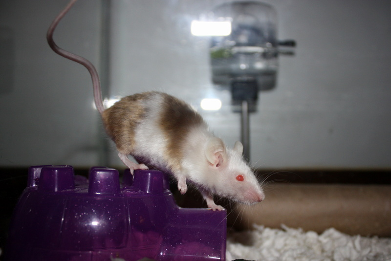 How did you end up with mice as pets? 2012-011