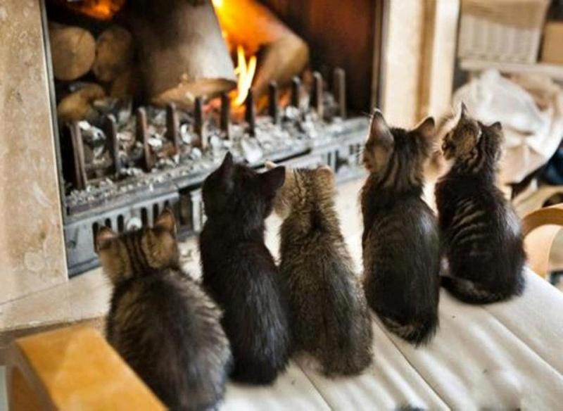 Réchauffons notre cœur et notre maison !! 14972710