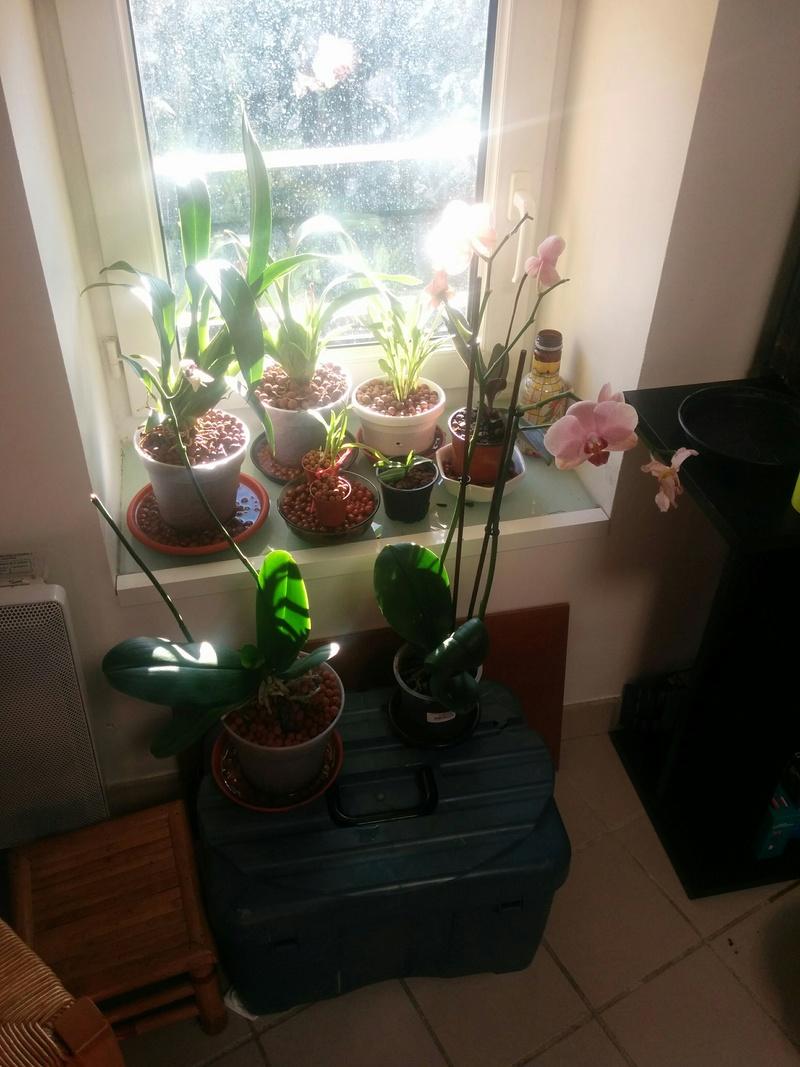 9 orchidées dans un 19m carré (et je peux encore en mettre) Img_2010