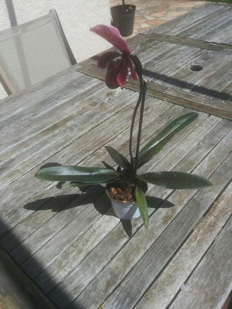 9 orchidées dans un 19m carré (et je peux encore en mettre) Img_2011