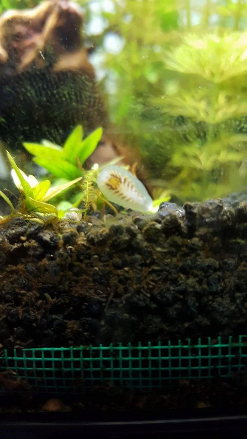 Découverte étrange dans l'aquarium. Photo_17