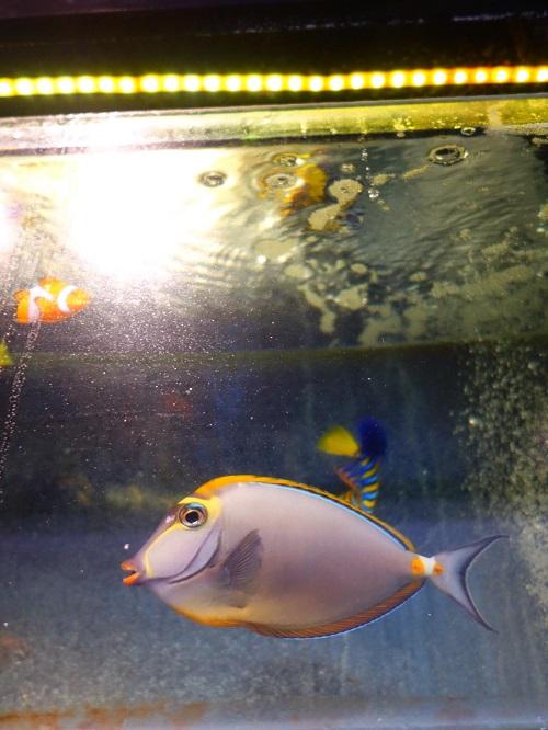 Stok ikan masuk JAVA REEF 14 September 2016  Fullsi12