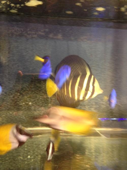 Stok ikan masuk JAVA REEF 14 September 2016  Img_7111