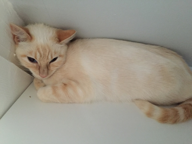 SNOWBELL - Page 3 Img_4610
