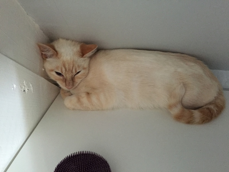 SNOWBELL - Page 3 Img_4612