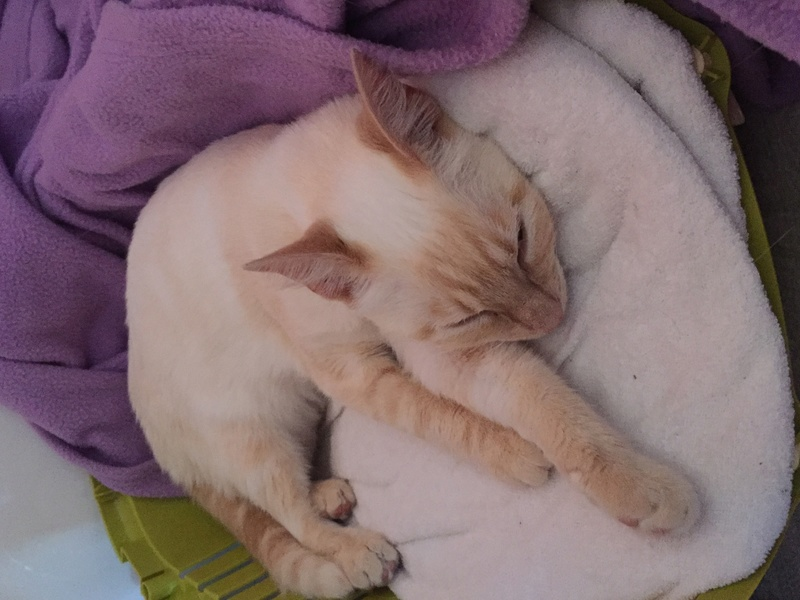 SNOWBELL - Page 3 Img_7010
