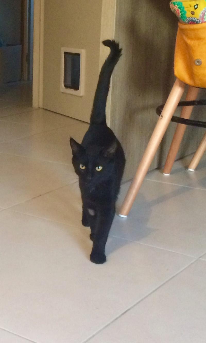 minuit - MINUIT – Jeune mâle noir – type européen -  né en mars 2016 Fichie11