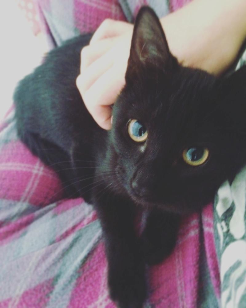 maxine - MAXINE – Jeune Femelle noire - née en juin 2016  Img_0211