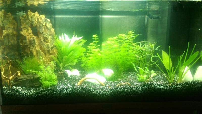 Aquarium 120L (1er aquarium) Imag0210