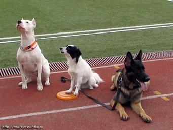 Первые в России показательные выступления по dog-frisbee Image012