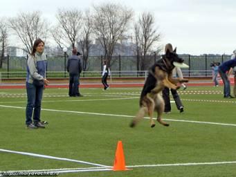 Первые в России показательные выступления по dog-frisbee Image013