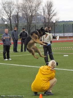 Первые в России показательные выступления по dog-frisbee Image014