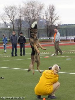 Первые в России показательные выступления по dog-frisbee Image015