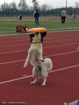 Первые в России показательные выступления по dog-frisbee Image016