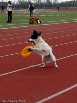 Первые в России показательные выступления по dog-frisbee Image017