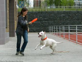 Первые в России показательные выступления по dog-frisbee Image018