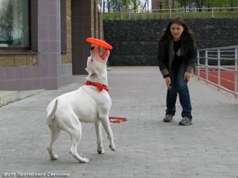 Первые в России показательные выступления по dog-frisbee Image019