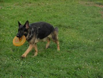 Если собака не приносит тарелку Image020