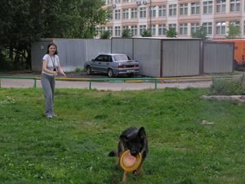 Если собака не приносит тарелку Image022