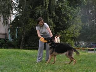 Если собака не приносит тарелку Image024