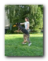 Методика обучения dog-frisbee Small_15