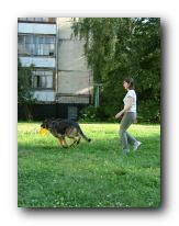 Методика обучения dog-frisbee Small_18