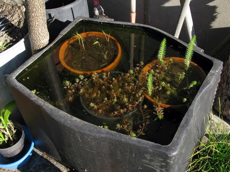 Bassins & bassines. Aqua8015