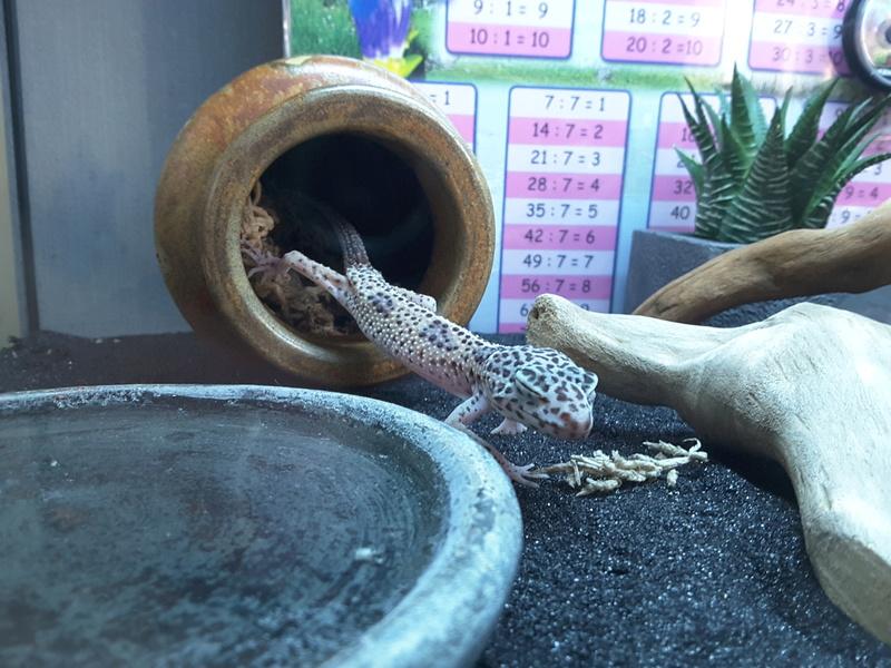 Gecko malade - Page 2 20160916
