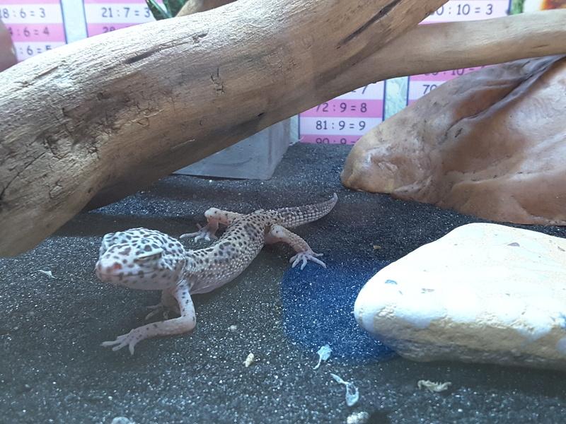 Gecko malade - Page 2 20160918