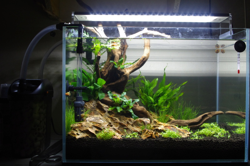 Conseils choix crevettes 20L (Débutant) Imgp1115