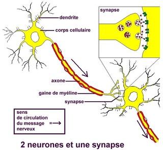 Les rocks et aussi les slows (mode radio radieuse) - Page 3 Neuron10