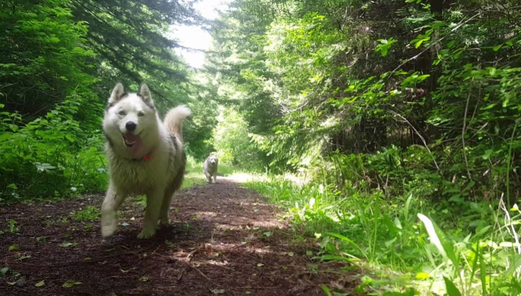 New Husky Owner! (who needs help!) 13731710