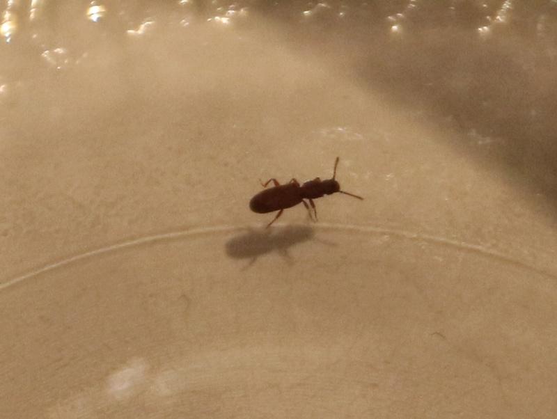 Insecte dans appartement  Img_4211