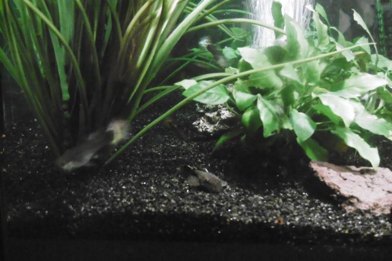 Population aquarium 120/150l 12_09_10