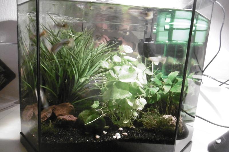Population aquarium 120/150l 15_09_12