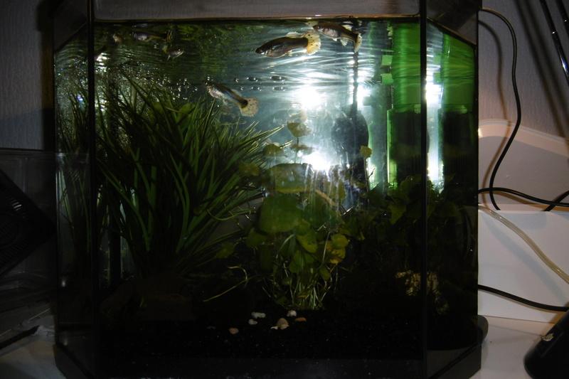 Population aquarium 120/150l 15_09_14