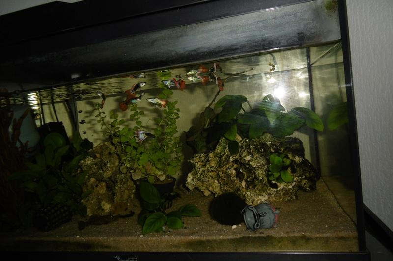 Population aquarium 120/150l - Page 2 23_09_11