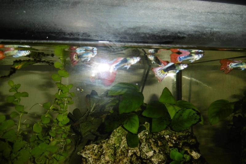 Population aquarium 120/150l - Page 2 23_09_12