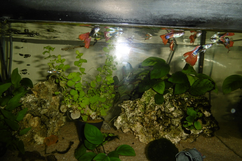 Population aquarium 120/150l - Page 2 23_09_13
