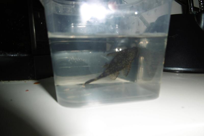 Population aquarium 120/150l Peut-y14