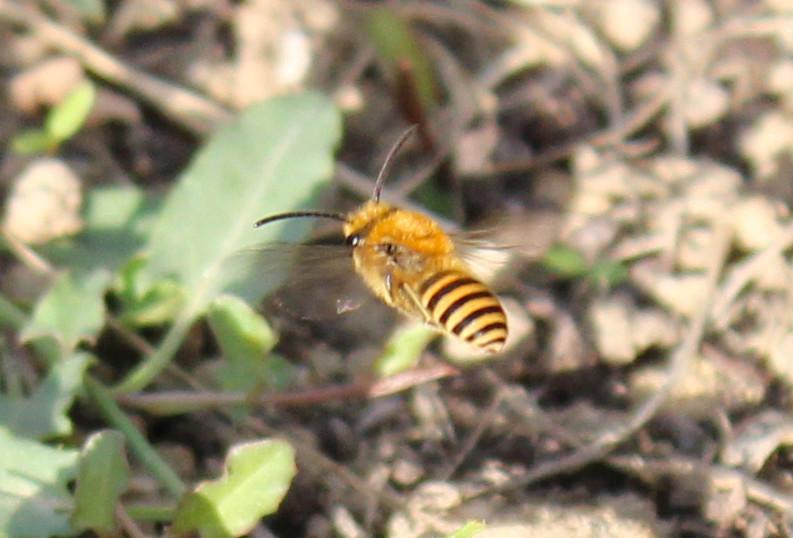 Guêpes ou abeilles ? Img_1311