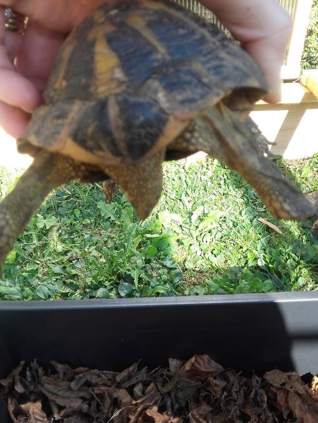 une carte d'identité pour ma tortue svp ;) Dos_mi11