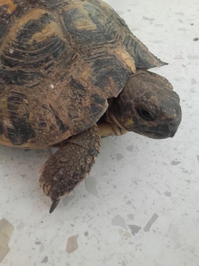 une carte d'identité pour ma tortue svp ;) Portra11