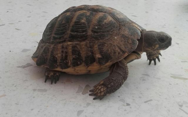une carte d'identité pour ma tortue svp ;) Profil11