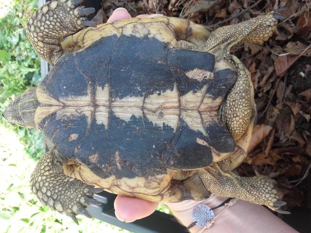une carte d'identité pour ma tortue svp ;) Ventre11