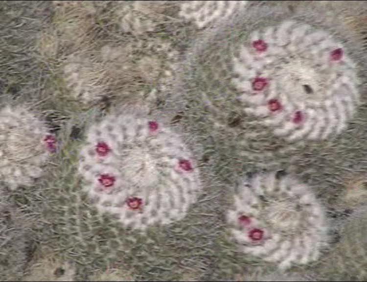Jardin de Cactus - Lanzarote 382_ma10