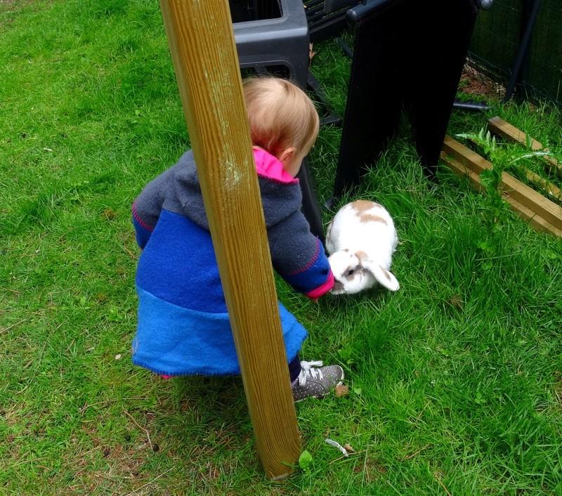 Nina, lapine bélier, née en aout 2011 - Page 9 Dsc02711