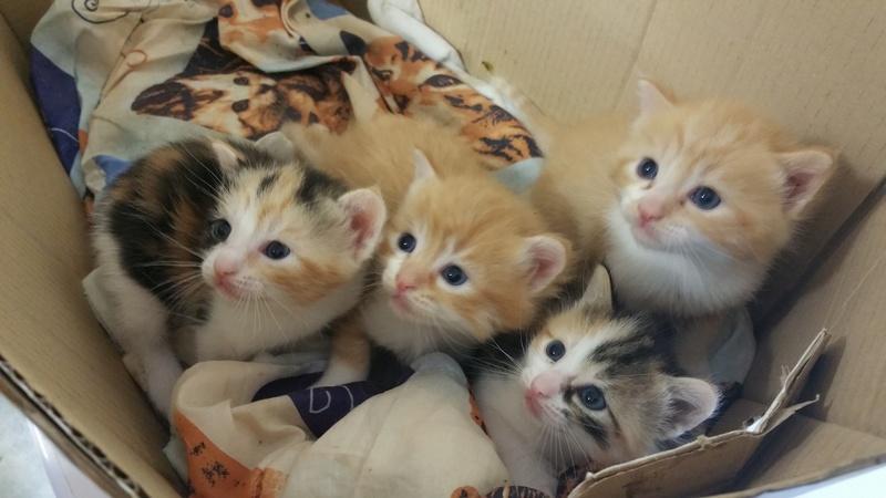 recherche d'urgence famille d'accueil pour 4 chatons d'environ 1 mois 20161010