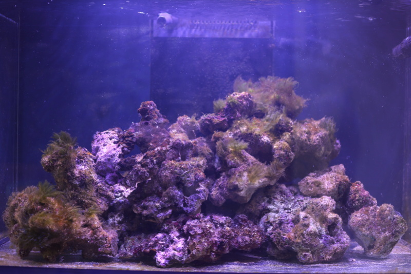 mon redsea reefer 250 Aquari10